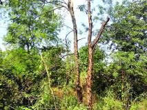 रत्नागिरी : कोंडगे येथे हायस्कूलवर झाड पडून नुकसान