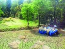 खेडमधील शेतकऱ्यांची पावणेसात कोटींची हानी