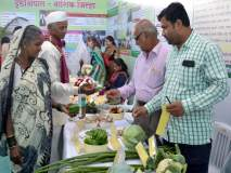 सेंद्रिय कृषीमालाला नाशिककरांची पसंती, कृषिमहोत्सवात शहरवासियांचा खरेदीला प्रतिसाद