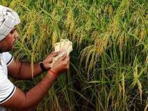 नियमित कर्जदार शेतकऱ्यांना प्रोत्साहनपर कर्जमाफीची प्रतीक्षाच !
