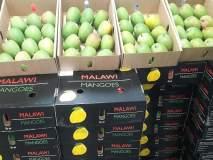 मलावी देशातील 'हापूस आंबा' विक्रीसाठी आज मुंबईत