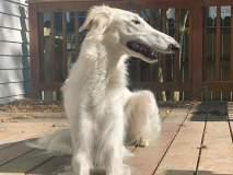 'या' कुत्र्याच्या नाकावर फिदा झाले लोक, तुम्हीही आधी पाहिला नसेल असा कुत्रा!