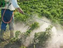 शेतकरी दुहेरी संकटात; पिकांवर किडींचा प्रकोप,फवारणीही ठरतेय घातक