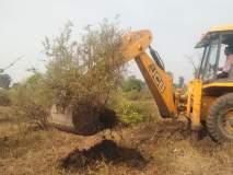 उत्पादन खर्चही न निघाल्याने शेतकऱ्याने उपटली डाळींब बाग!