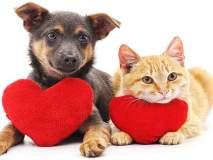 'इथे' कुत्रे आणि मांजरीही करतात रक्तदान, जागोजागी आहेत ब्लड बॅंक!