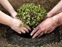 सामाजिक वनीकरणअंतर्गत गडगा परिसरात वृक्षलागवडीचा फार्स