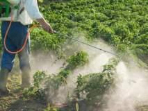 फवारणीतून विषबाधा : केवळ ४६८ शेतकरी-शेतमजुरांची आरोग्य तपासणी!