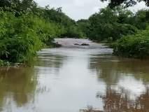 पाथरी तालुक्यात परतीचा पाऊस जोरदार बरसला; नदीनाले तुडुंब भरले