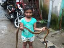 पाच वर्षांची चिमुकलीरीधिमा बनली सर्पमित्र