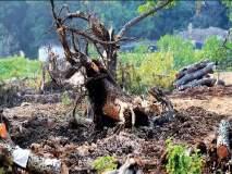 पर्यावरणाच्या जतनासाठीच आरे कारशेडला विरोध