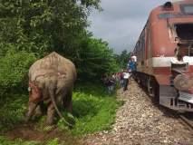 हत्तीला रेल्वेची धडक बसल्याची अफवा, जाणून घ्या व्हायरल सत्य