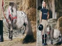 'हा' आहे जगातला सर्वात कमी उंचीचा घोडा, जाणून घ्या त्याची उंची...