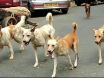 नागपूर शहरात ८० हजारांवर मोकाट कुत्रे : व्हीटीएसचा सर्वे