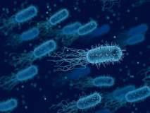 योग्य ती काळजी न घेतल्यास जीवघेणे ठरू शकतात हे 'Superbugs'