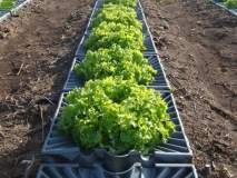 गोव्यात लवकरच इस्रायली तंत्रज्ञान कृषी केंद्र, सेंद्रीय शेतीला प्रोत्साहन