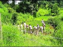 तेलंगवाडीत भातशेतीवर वनविभागाची कारवाई! आदिवासी, श्रमजीवी संघटना करणार आंदोलन