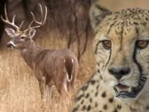 ही आहेत प्राण्यांची काही हटके वैशिष्ट्ये