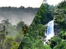 हे आहेत सर्वाधिक घनदाट जंगले असलेले आघाडीचे दहा देश