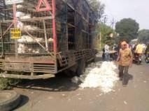 कोंबड्यांची वाहतूक करणारा ट्रक उलटल्याने ४००कोंबड्या मृत्यूमुखी