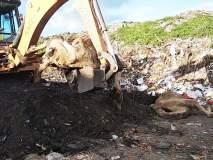चार मृत उंटांना पुरण्यासाठी 'जेसीबी'ने खोदले वीस फुटांचे खड्डे