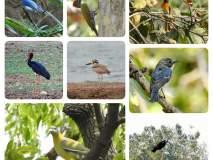 काटेपुर्णा अभयारण्यात आढळल्या पक्ष्यांच्या १२५ प्रकारच्या दुर्मिळ प्रजाती