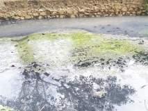 औद्योगिक वसाहतींंतील दूषित पाणी खाडीत;मासेमारी संकटात