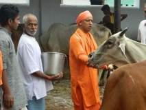 गोवंश प्राण्यांच्या मृत्युने CM योगी नाराज, 8 अधिकाऱ्यांचे निलंबन