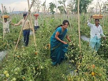 In Bhandara district, women farmers have taken huge income by adding technology | भंडारा जिल्ह्यात तंत्रज्ञानाची जोड देत महिला शेतकऱ्याने घेतले भरघोस उत्पन्न