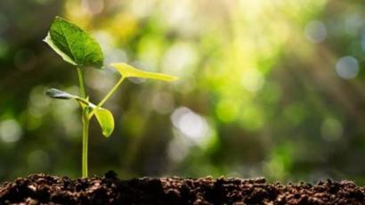 The forest department has saved a quarter of a million trees to increase oxygen | ऑक्सिजन वाढविण्यासाठी वनविभागाने जगविली सव्वातीन लाख झाडे