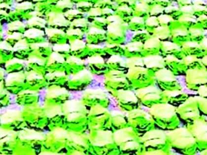 Chandrapur News Today | चंद्रपूर Newspaper| Whatsapp Group Link