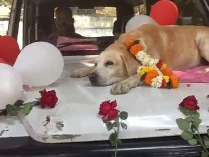 Police salute sniffer spike dog looking for petrol bomb!   पेट्रोल बॉम्ब शोधणारा स्निफर स्पाइकश्वानाला पोलिसांचा सॅल्यूट!