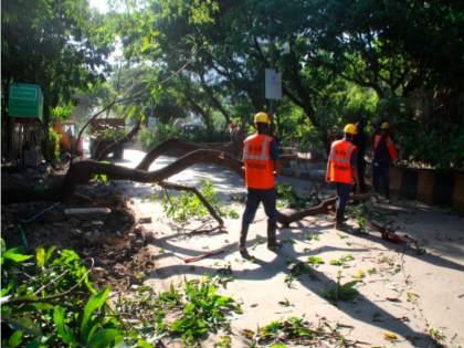 In Thane, 585 trees fell in eight months | ठाण्यात आठ महिन्यांत पडली ५८५ झाडे; मुसळधार पावसाचा तडाखा