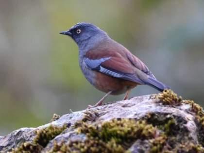 World Migratory Bird Day; About 250 foreign birds visited Vidarbha   जागतिक स्थलांतरित पक्षीदिन; २५० च्यावर परदेशी पक्ष्यांनी दिली विदर्भाला भेट