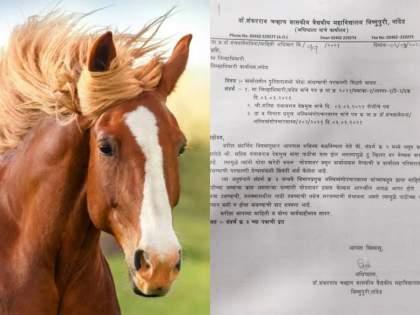 Traveling on horseback can lead to collisions, with increased risk of spinal cord injury, nanded collector office | 'घोड्यावरुन प्रवास केल्याने आदळआपट होते, मणक्याचा त्रास वाढण्याची दाट शक्यता'