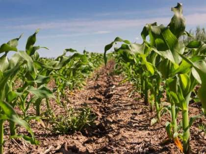 Climate change impacts agriculture, economy! | हवामान बदलाचा परिणाम शेती, अर्थकारणावर!