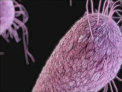 US Incurable candida auris new trouble in America | अमेरिकेत कोरोनाबरोबरच आणखी एक मोठं संकट! असाध्य Candida Auris मुळे पसरली दहशत