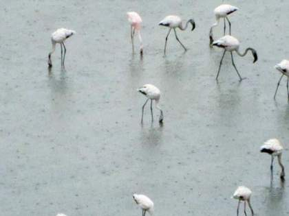 5 percent of the birds are backed by climate change | हवामान बदलामुळे ७० टक्के पक्ष्यांची पाठ