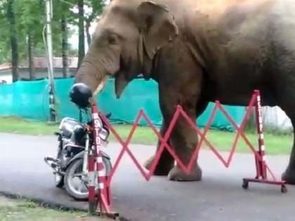 Horrible video: Helmet on bike; elephant ate it understanding as a fruit   Horrible video: बाईकवर ठेवले होते हेल्मेट; हत्तीने फळ समजून खाल्ले, अन्...