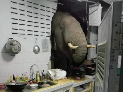Watch photo of wild hungry elephant who entered in kitchen after breaking wall to find food in Thailand house | रात्री घरात येत होते अजब आवाज, बघितलं तर भींत तोडून घरात शिरला होता हत्ती!