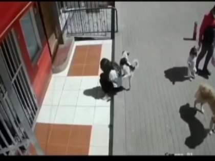Dog pee on girl, watch this funny viral video | हा टॉमी भलताच कारागिर! शांत बसलेली मुलगी, या पठ्ठ्याने मागून जाऊन केले असे काही...