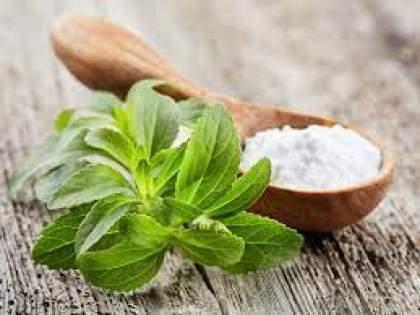 Stevia is extremely beneficial for diabetes benefits of stevia for health   तुळशीसारखी दिसणारी 'ही' वनस्पती डायबिटीसच्या रुग्णांसाठी ठरतेय वरदान, नाव आहे....