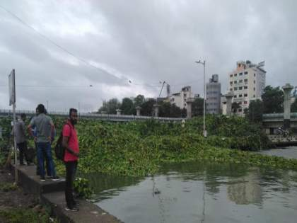 Pune's Bhide Bridge under Jalparni this year; Entire road block   पुण्याचा भिडे पूल यावर्षी जलपर्णीच्या खाली; संपूर्ण रस्ता ब्लॉक