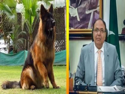 Gujaranwala Commissioner dog raises 'tension'; 4 lakh dogs lost in house hunts in Pakistan | आयुक्तांच्या श्वानाने वाढविले 'टेन्शन';पाकिस्तानात घराेघरी शाेधाशाेध, ४ लाखांचा श्वान हरवला