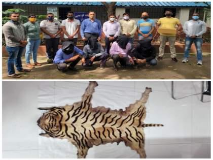 4 arrested for selling Patteri tiger skin at Sarola on Pune-Satara highway   पुणे - सातारा महामार्गावरील सारोळा येथे पट्टेरी वाघाच्या कातड्याची विक्री करणारे ४ जण जेरबंद