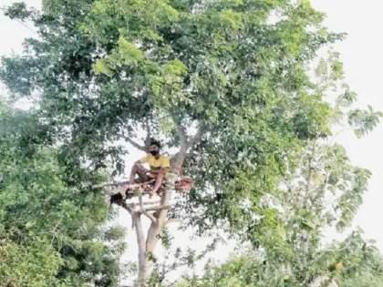 telangana student spent 11 days of isolation on tree due to corona | CoronaVirus: अरेरे! घरात विलगीकरणासाठी जागा नाही; पठ्ठ्याने झाडावर काढले तब्बल ११ दिवस
