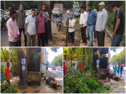 cutting down trees pashan university road cycle tracks protests environmentalists | सायकल ट्रॅकसाठी पाषाण-विद्यापीठ रस्त्यावरील वृक्षांची कत्तल; पर्यावरणप्रेमींकडून निषेध