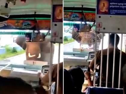 Elephant attack on bus breaks windshield ifs says huge respect for the driver of bus watch video   VIDEO : हत्तीने बसवर केला घातक हल्ला, लोकांकडून ड्रायव्हरचं कौतुक