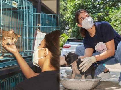 Jacqueline fernandez is now help the animals | जे बात ! आता मुक्या प्राण्यांच्या मदतीसाठी धावून आली जॅकलिन फर्नांडिस, होतोय कौतुकाचा वर्षाव