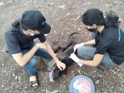 dombivlikar help to rescue 150 animals in mahad after heavy rain | पावसाच्या महापुराचा महाडमधील १५० प्राण्यांना फटका; डोंबिवलीकर प्राणिमात्रांची मदत