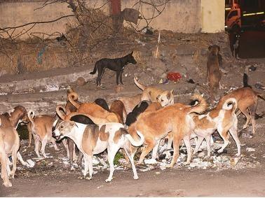300 stray dogs killing poison in andhra pradesh west godavari village | माणुसकीला काळीमा! आंध्र प्रदेशात 300 भटक्या श्वानांना विष देऊन मारलं, घटनेने खळबळ